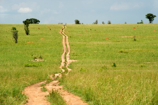 Dirt road passing through a field, Murchison Falls National Park, Uganda : Stock Photo