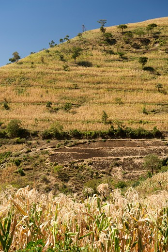 Cultivated land on the slopes of a mountain, Mount Elgon, Uganda : Stock Photo