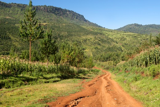 Dirt road passing through mountains, Mount Elgon, Uganda : Stock Photo