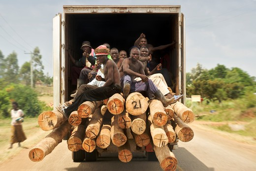Truck carrying timbers with labourers, Uganda : Stock Photo
