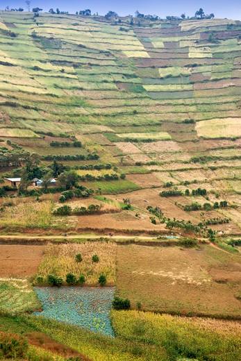 High angle view of terraced fields, Kisoro, Muko, Uganda : Stock Photo