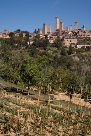 Field on a hill with town in the background, San Gimignano, Siena, Tuscany, Italy : Stock Photo