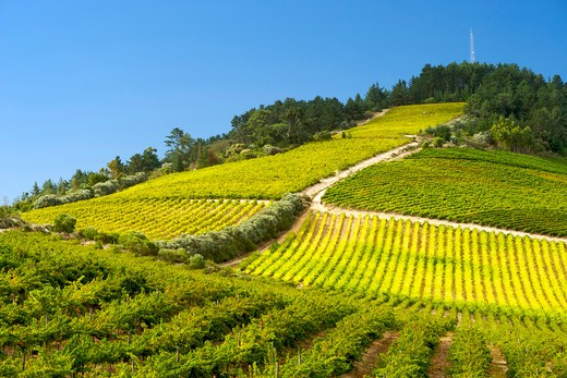 View Across Vineyards Of The Stellenbosch District, Western Cape Province, South Africa. : Stock Photo