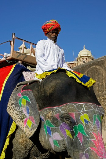 Elephant Taxi At The Amber Palace : Stock Photo