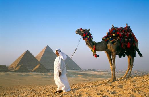 Giza, Pyramids & Camel : Stock Photo