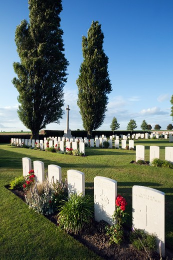 First World War British military cemetery with Poplar trees. : Stock Photo