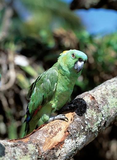 Rainforest/Animals, Parrot : Stock Photo