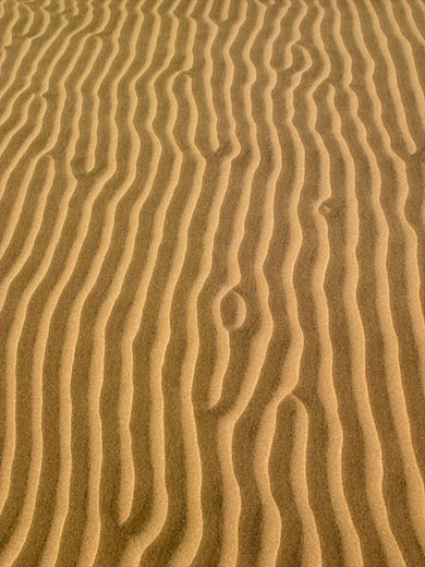 Beach, Florence Sand Dunes : Stock Photo