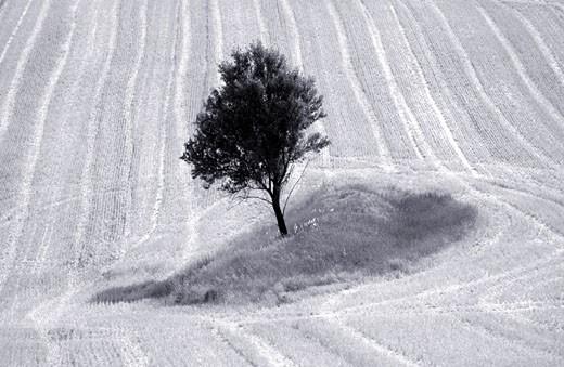 Provence, Rural Landscape : Stock Photo