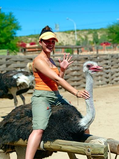 Ostrich Farm : Stock Photo