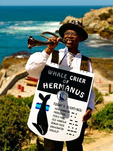 Agulhas, Hermanus Whale Crier : Stock Photo