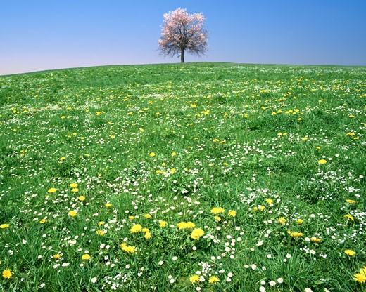 The Four Seasons - Spring : Stock Photo