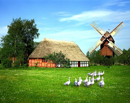 Farm And Mill Near Kiel : Stock Photo
