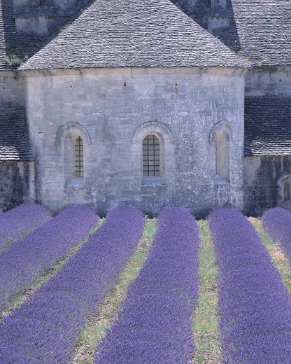 Abbaye De Senanque : Stock Photo