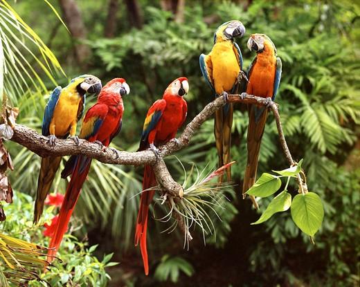 Animals, Birds, Parrots : Stock Photo