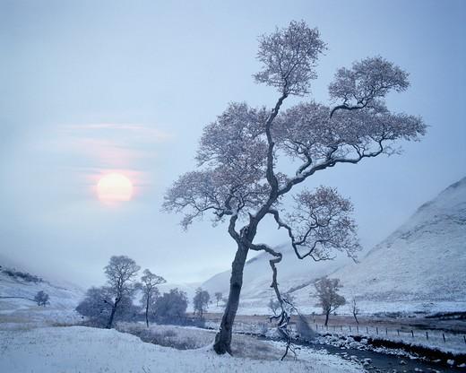 Scotland: Glen Lochsie : Stock Photo