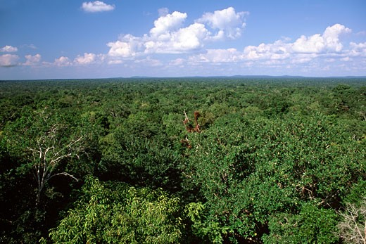 Tierras Bajas Rainforest, From Calakmul : Stock Photo