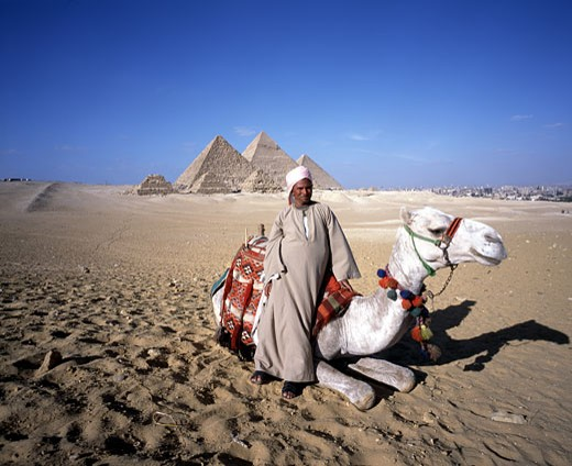 The Pyramids, Camel & Cairo : Stock Photo