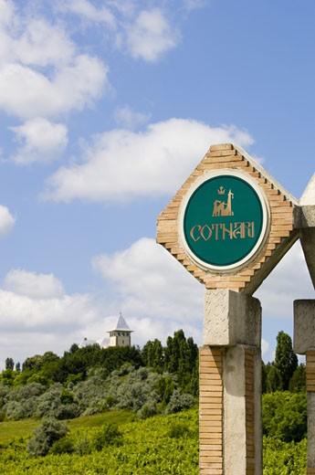 Cotnari, Wine Growing Region : Stock Photo
