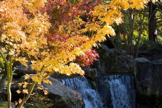 Autumn Colours In The Kyoto Garden, Holland Park : Stock Photo