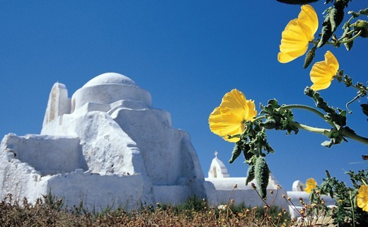 Stock Photo: 196-2430 Greece, Cyclades, Mykonos Island, Yellow blossom with church in background