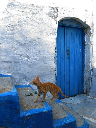 Greece, Cyclades, Tinos island, Cat on steps : Stock Photo