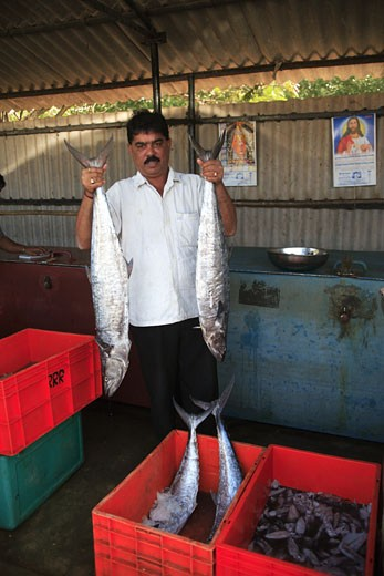 North Goa The Panaji Fish Market, Kingfish : Stock Photo