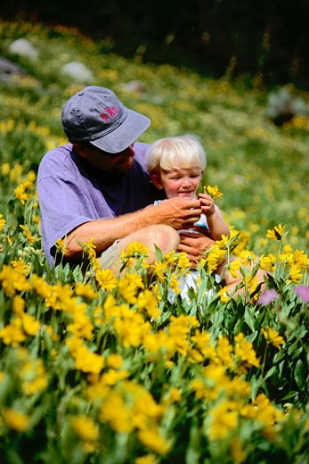 Father and son sitting in field of flowers in the Wasatch mountains near Alta in Utah  USA : Stock Photo