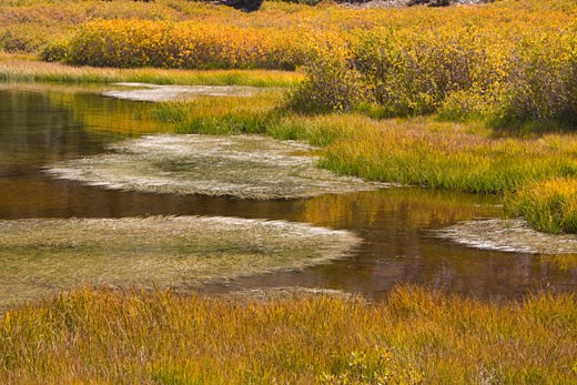 A pond with fall foliage at Virginia Lakes in the Sierra mountains of California : Stock Photo
