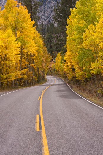 Stock Photo: 1989-1242 A narrow country road winding through brilliant yellow aspen trees in the the fall near June Lake in California