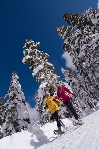 Stock Photo: 1989-1345 A couple snowshoeing on a sunny winter day with snow covered trees at Northstar near Lake Tahoe in California