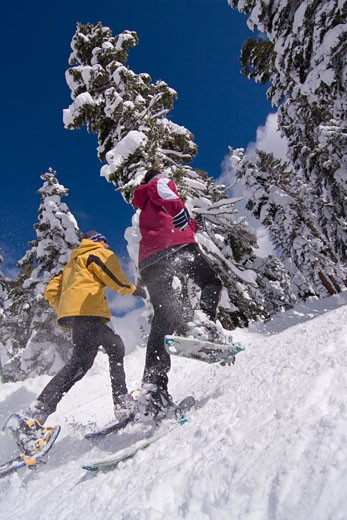 Stock Photo: 1989-1347 A couple running on snowshoes past snow covered pine trees at Northstar near Lake Tahoe in California