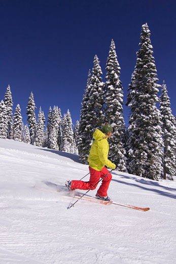 A woman telemark skiing past snow covered pine trees at Northstar ski resort near Lake Tahoe in California : Stock Photo