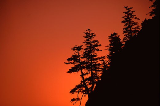 A silhouette of Douglas Fir trees at sunset in the Mount Hood National Forest in Oregon : Stock Photo