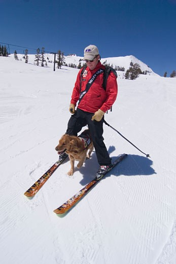 Stock Photo: 1989-3482 An avalanche rescue dog running between the legs of a ski patroller skiing at Squaw Valley in California