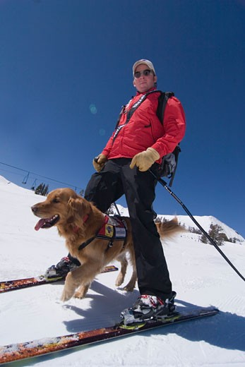 An avalanche rescue dog running between the legs of a ski patroller skiing at Squaw Valley in California : Stock Photo