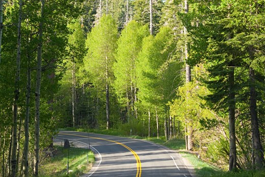 Stock Photo: 1989-4261 Aspens trees in the spring and a winding road near Lake Tahoe in California