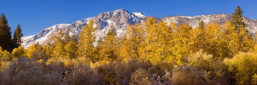 Autumn leaves in front of a snowy Mount Tallac near lake Tahoe in California : Stock Photo