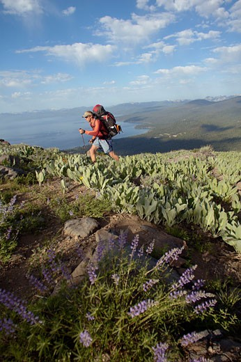 A man backpacking through flowers on the Tahoe Rim Trail above Lake Tahoe CA : Stock Photo