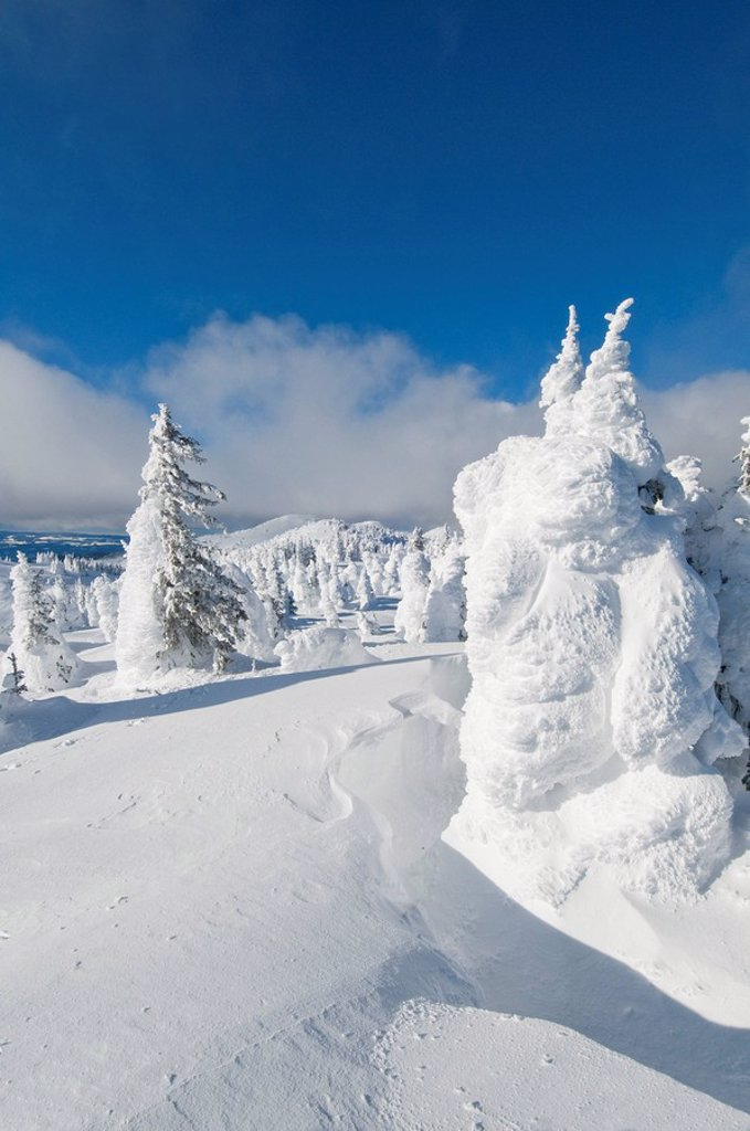 Snow ghosts at the top of Sun Peaks Ski Resort, create a dramatic winter scene, near Kamloops, British Columbia Canada : Stock Photo