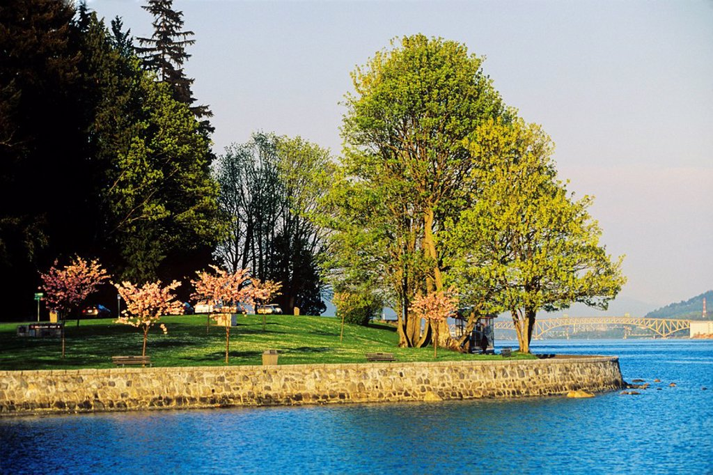 Stock Photo: 1990-12232 flowering Crab apple Trees, seawall, Stanley Park, Vancouver, British Columbia, National Historic Site, spring