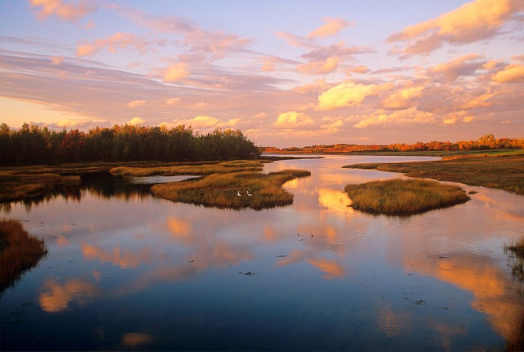 Cap-Pele, New Brunswick, Canada, Fall, River, geese, clouds, reflection : Stock Photo