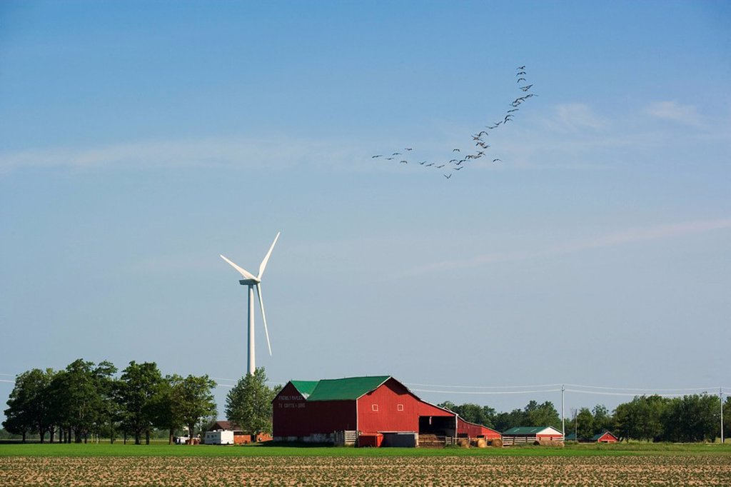 Canada Geese and wind turbines, Shellburne, Ontario, Canada : Stock Photo