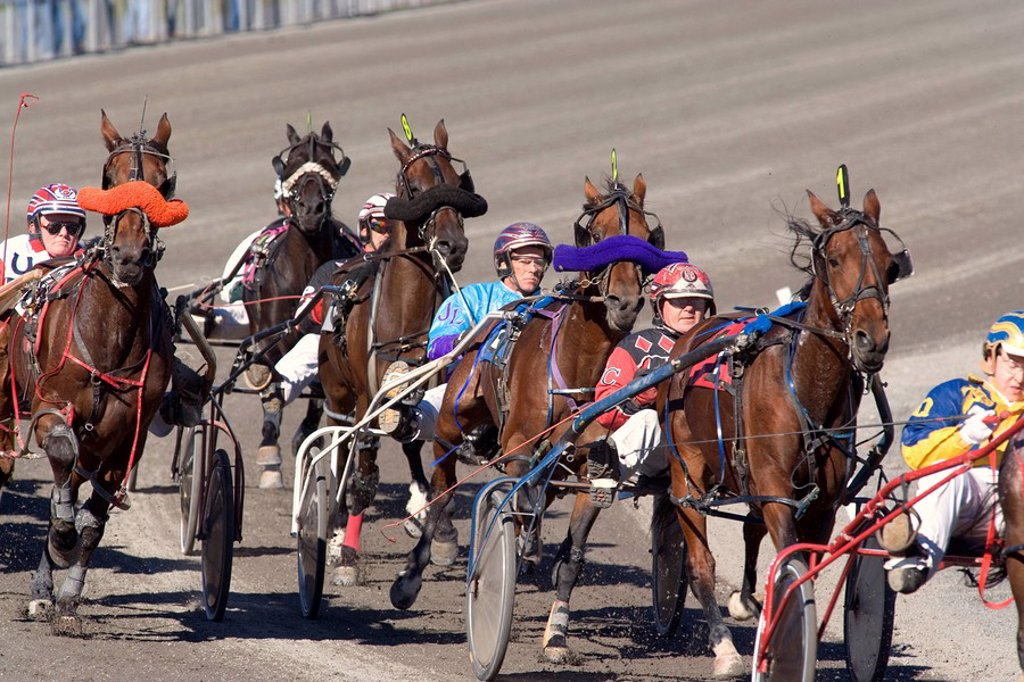 Stock Photo: 1990-12584 Harness Racing, Charlottetown Driving Park, Prince Edward Island, Canada