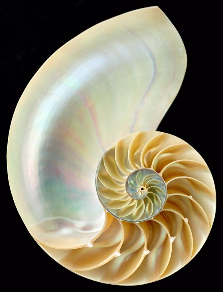 Stock Photo: 1990-12815 nautilus shell on black background