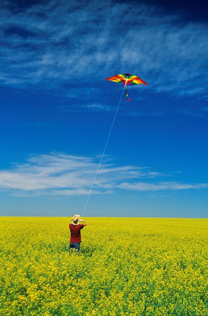 a teenage farm girl flies a kite in a bloom stage canola field, near Somerset, Manitoba, Canada : Stock Photo