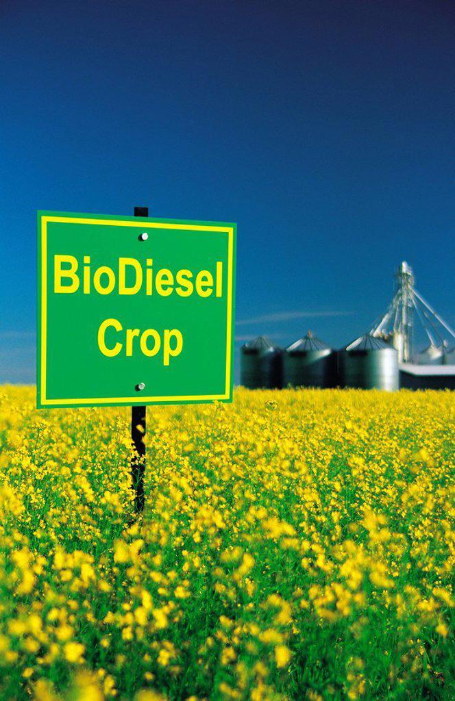 biodiesel sign in canola field, Manitoba, Canada : Stock Photo