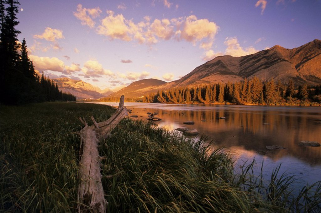 The Bow river in Bow Valley Provincial Park near Canmore, Alberta, Canada : Stock Photo