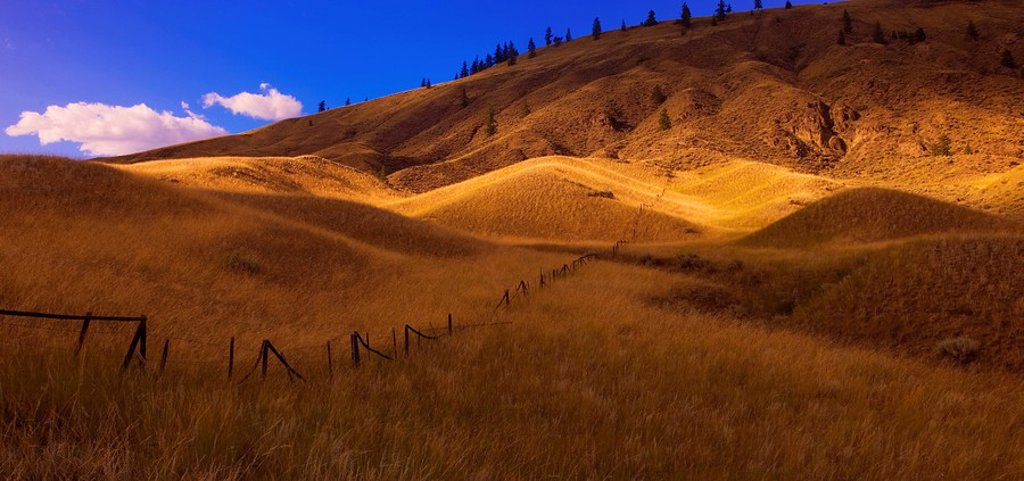 Stock Photo: 1990-14053 Panoramic of grasslands at sunset, British Columbia, Canada