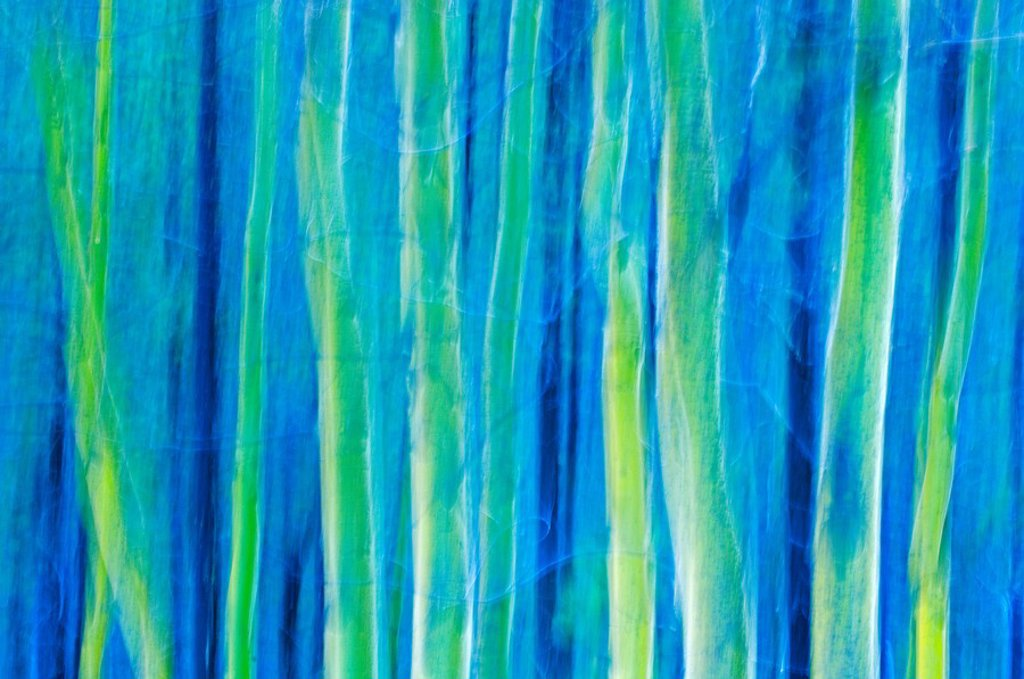 Abstract of aspen Populus trees, Waterton Lakes National Park, Alberta, Canada : Stock Photo